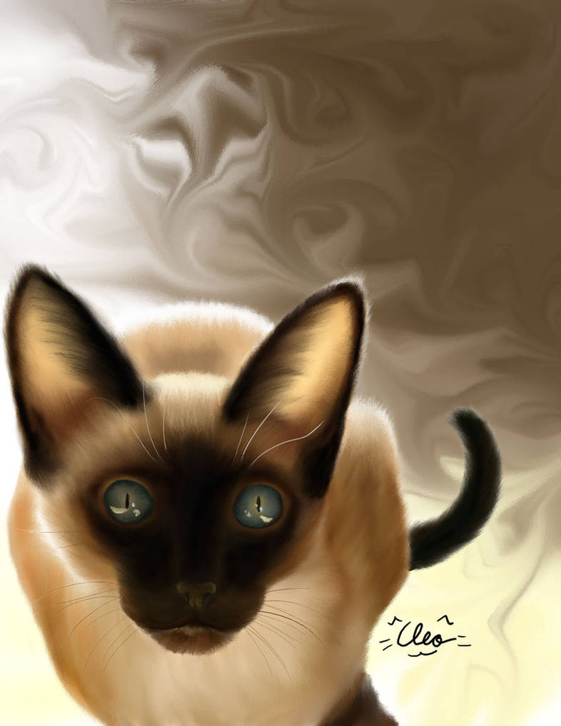 Siamese and Coffee