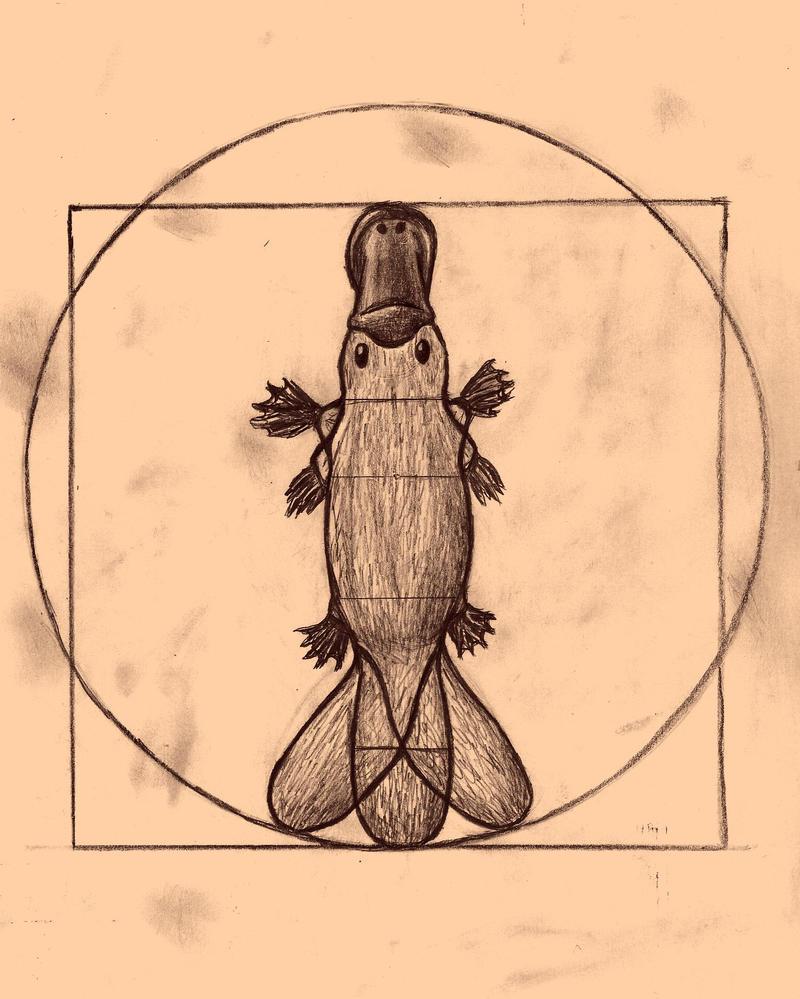 The Vitruvian Platypus by WeaselsHaveLasers on DeviantArt