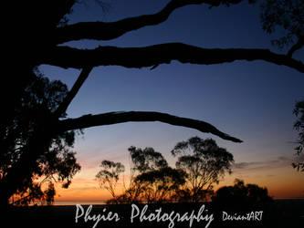 Wild Dog Glen: Sunset trees by PuppetReaver