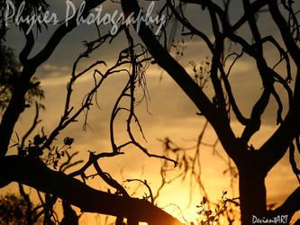 Wild Dog Glen: Dead trees by PuppetReaver