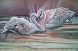 Swans - Lee Bogle