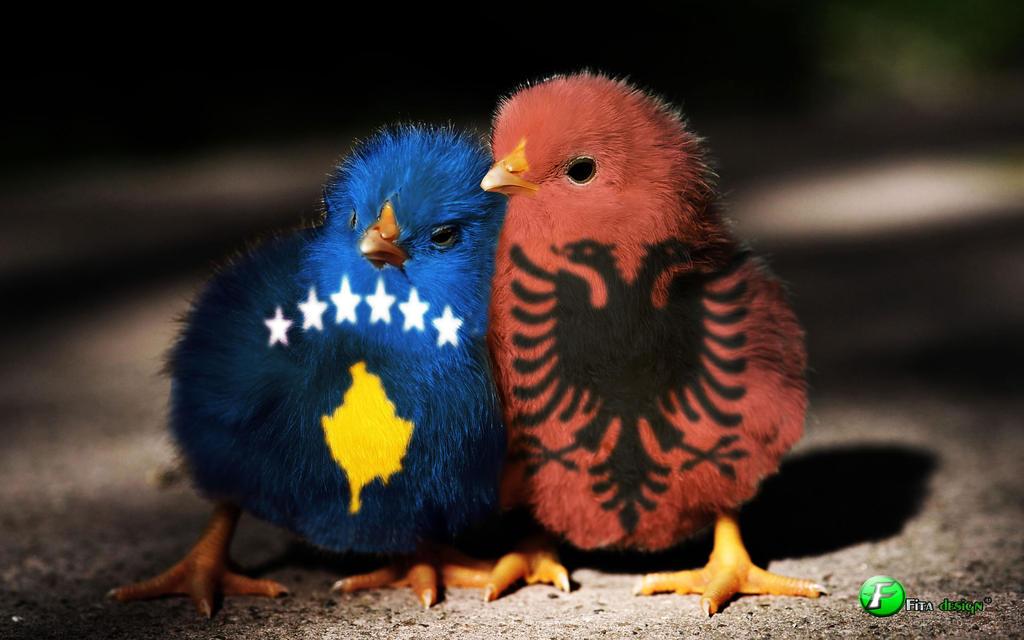 Ads kosova homoseksuell chat