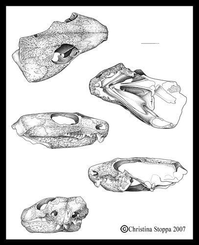 Captorhinus by Qiu-Ling