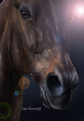 Up Close Horse Portrait