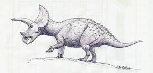 A Triceratops named Buckaroo