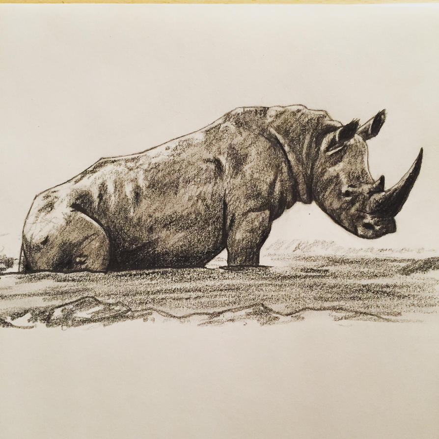 Rhino sitting on its behind-o.  by DinoHunter000