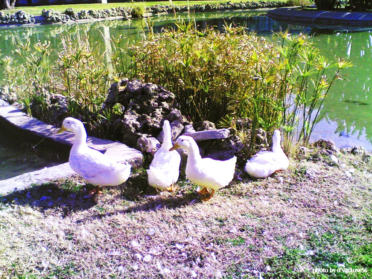 Otogardaki Ördekler