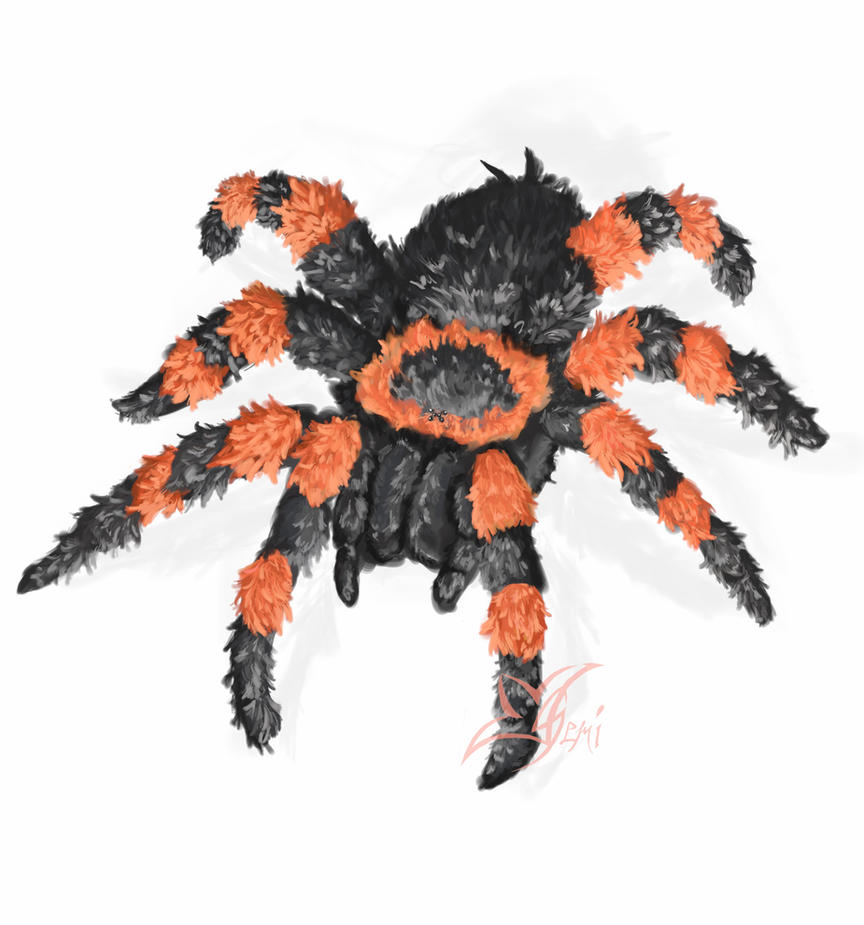 A Fluffy Tarantula by Gemini-Mystica