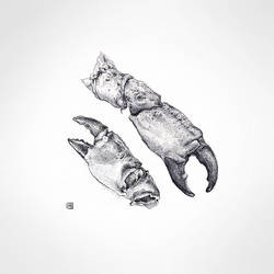 Claws by Scriblab