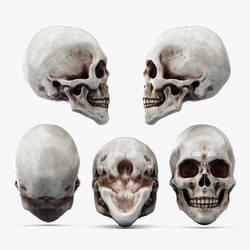 Skull by Scriblab