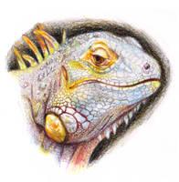 Iguana by NessaSan