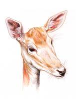 Deer by NessaSan
