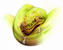 Snake by NessaSan