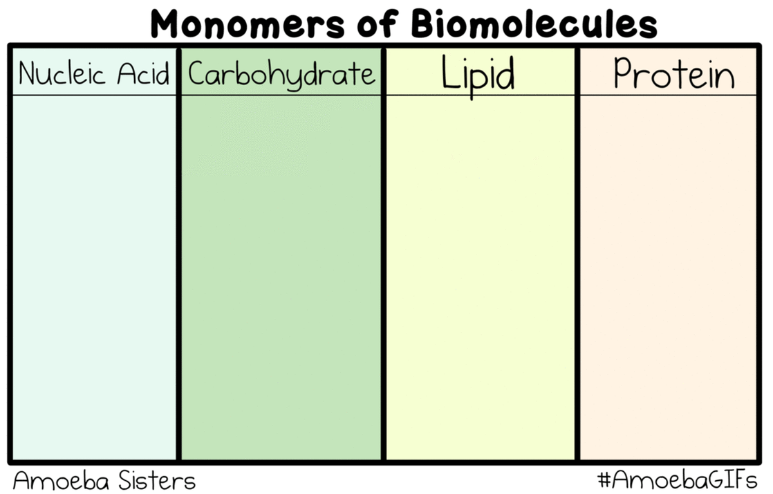 monomers of biomolecules gif by sarinasunbeam on deviantart