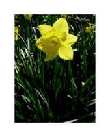 spring 02 by xblaisexzabinix