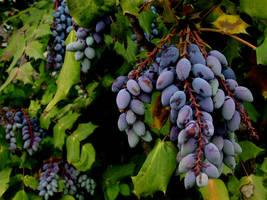the darker the berry... by xblaisexzabinix