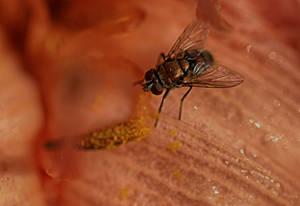 Pollen Drink