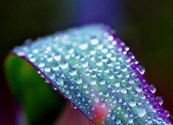 Droplets on a Curve