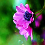 .:anemone:.