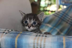 kitty by MyBrightSide33