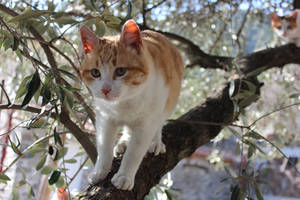 cat on a tree by MyBrightSide33