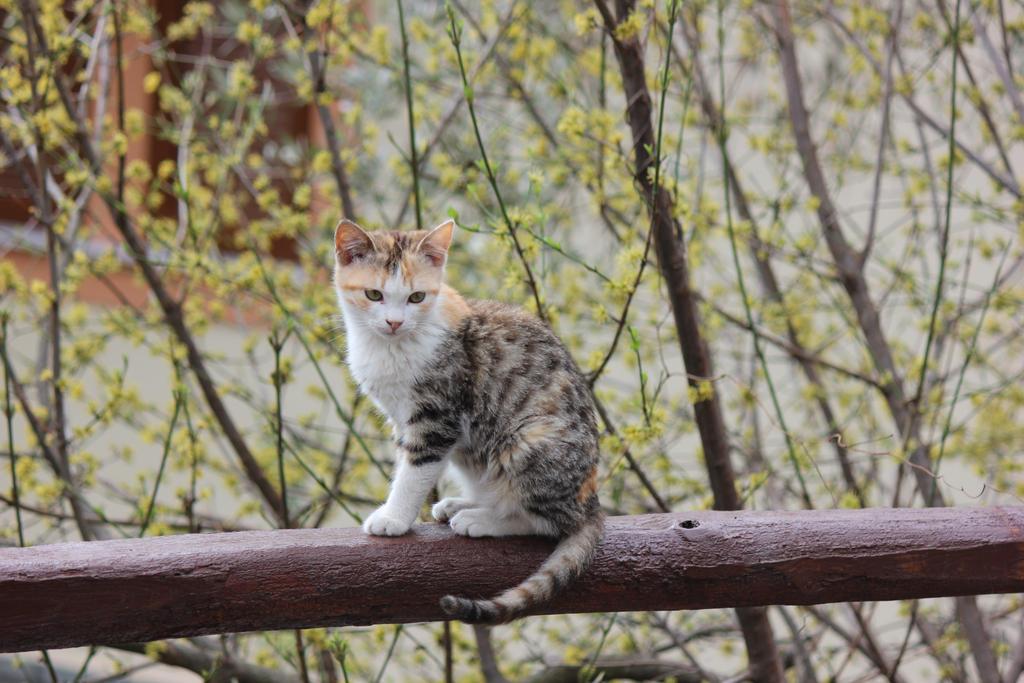 cat by MyBrightSide33