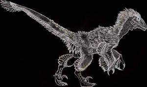 Variraptor sketch