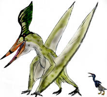 Pteranodon by Durbed