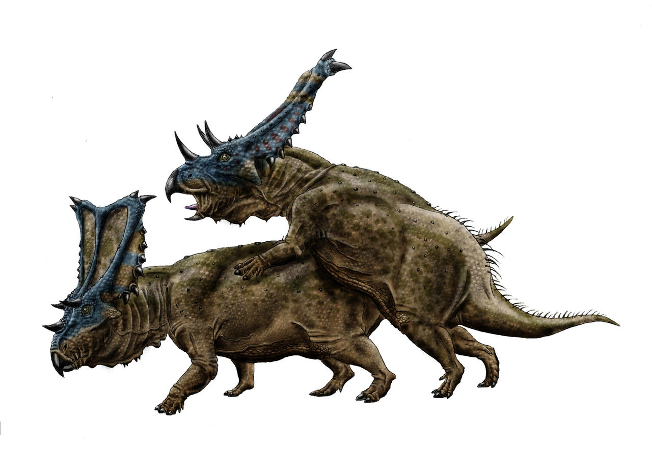 Chasmosaurus love by Durbed