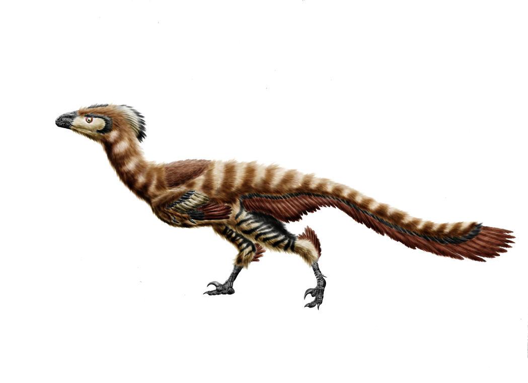 Hesperonychus   www.imgkid.com - The Image Kid Has It!