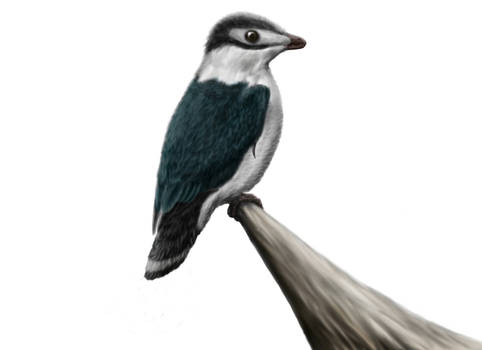 Iberomesornis romerali