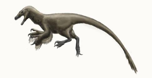 Dromaeosaurus albertensis by Durbed