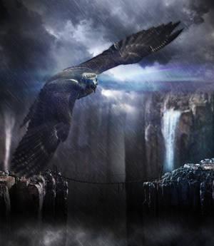 Eagle over the bridge