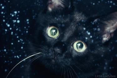 Christmas Kitten by Little-LadyBee
