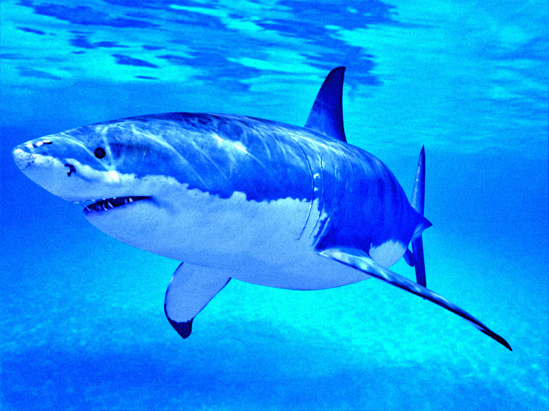 3-D Great White Shark by waynedowsent on DeviantArt  Great White Shark Painting