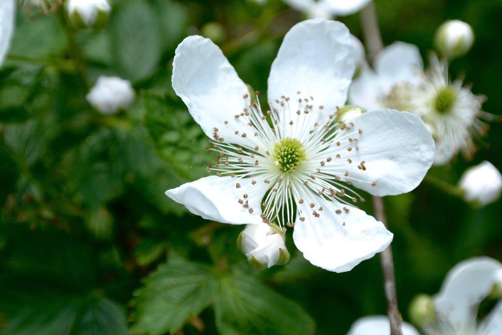 White Flower by OwlCityHootOwl