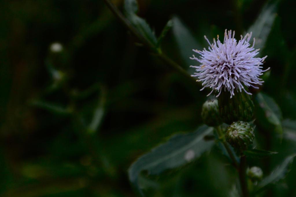 Purple Flower by OwlCityHootOwl