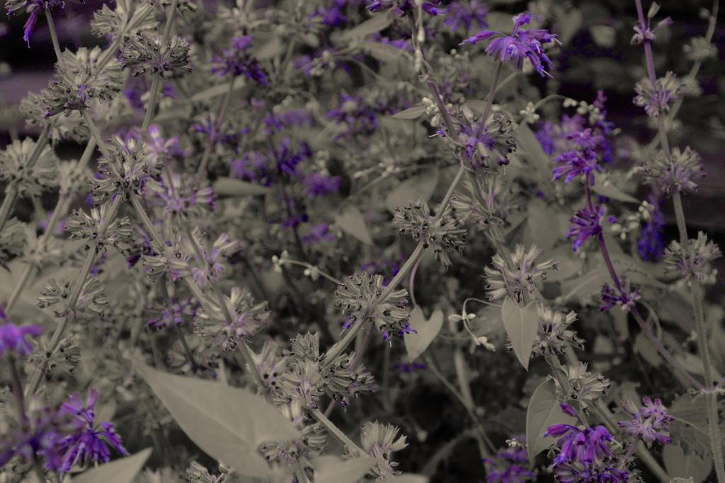 Purple by OwlCityHootOwl
