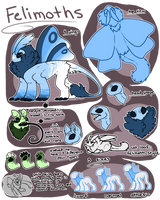Felimoth: Species Sheet
