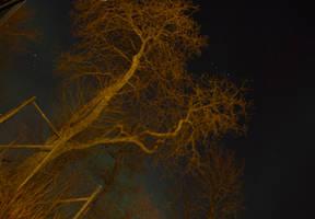 Aurora Borealis behind tree - Bodoe, Nordland