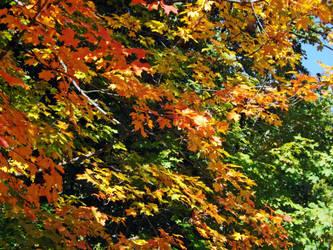 I miss the fall