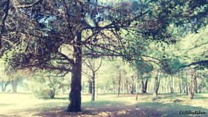 Quiet trees  version1 by shytiha