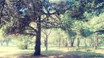 Quiet trees  version1