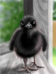 Baby Crow by LamiJavin