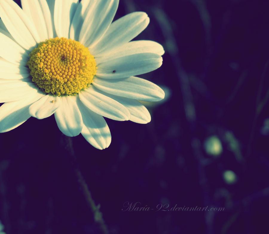 - Daisy - by Maria-92