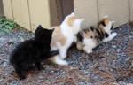 5 19 09 Kitten Conga