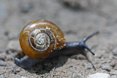 Unknown Land Snail by DeviantLadyAshley