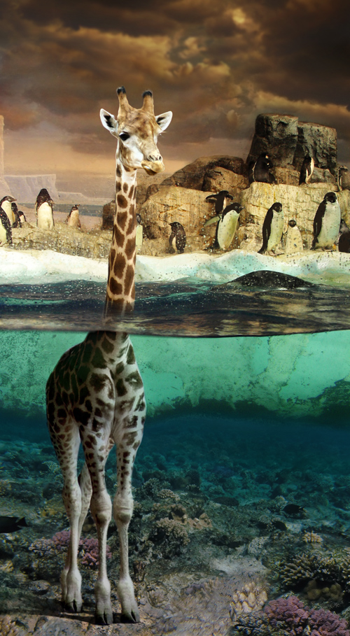 Charlie the Giraffe by oilcorner