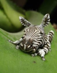 Zebrafrog by oilcorner