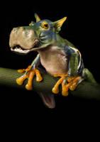 Hippofrog 1 by oilcorner